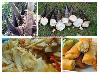 Rebung merupakan salahsatu jenis sayuran yang sudah dikonsumsi penduduk Indonesia semenjak l Manfaat Kandungan Rebung untuk Tubuh