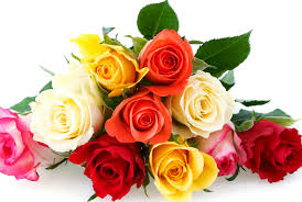 Bunga mawar yaitu tanaman hias yang sangat rupawan Ungkapkan Perasaanmu dengan Bunga Mawar