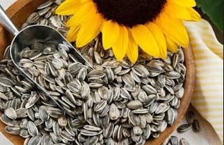 Sejuta Manfaat Biji Bunga Matahari Untuk Kesehatan  Sejuta Manfaat Biji Bunga Matahari Untuk Kesehatan