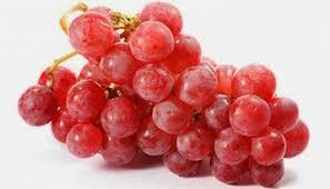 Buah anggur termasuk family vitaceae dan genus vitis Khasiat Buah Anggur