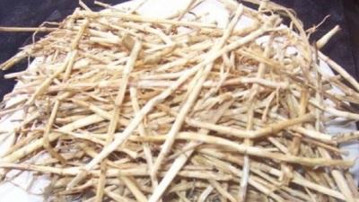 Kandungan dan manfaat akar pepaya untuk kesehatan  Kandungan dan Manfaat Akar Pepaya untuk Kesehatan